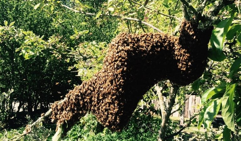 Bees Come a Calling